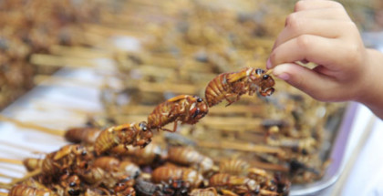 7_Fried crickets